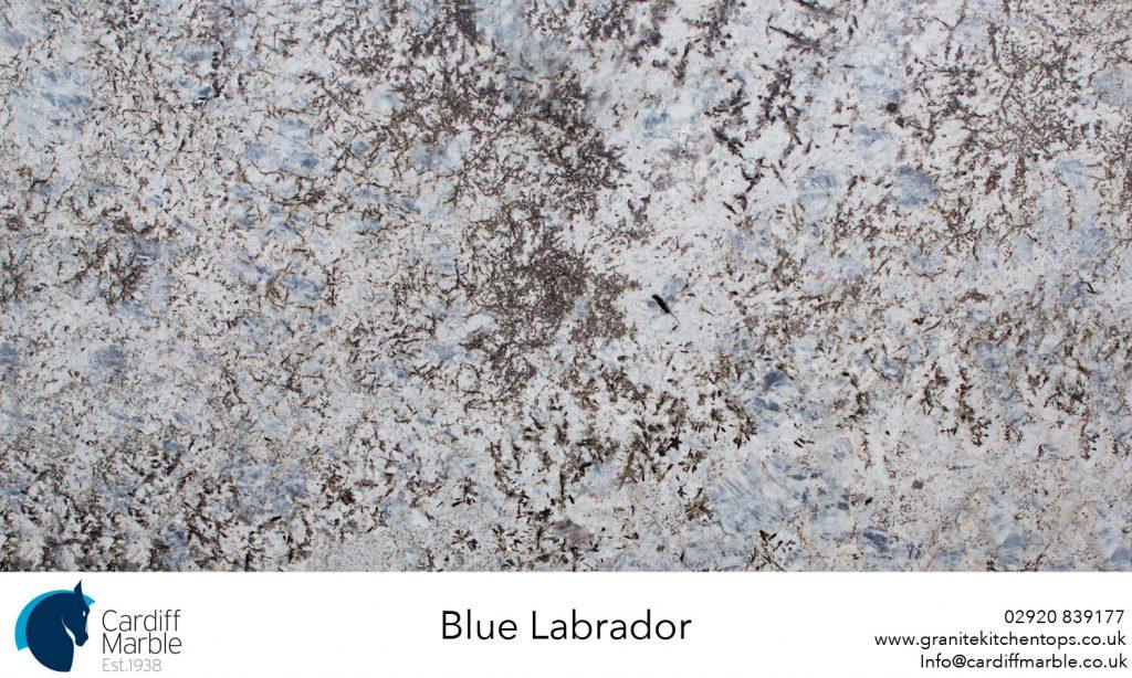 Blue-Labrador